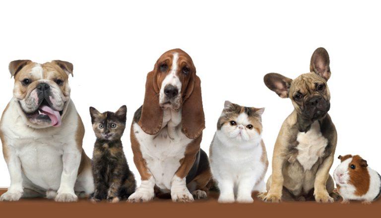 Pets header