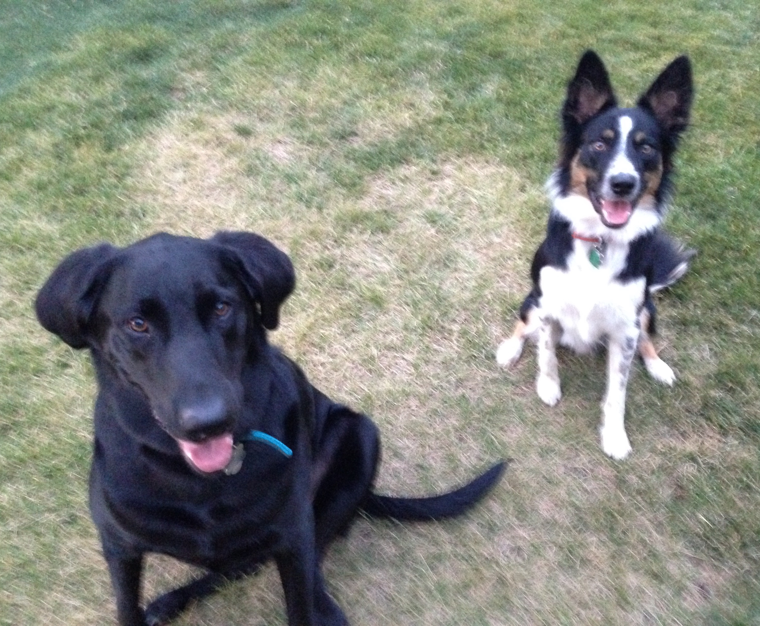 Rocky and Snickers are the perfect remedy to a hectic day. As soon as I walk in the door, they're waiting there with a rawhide and a smile!